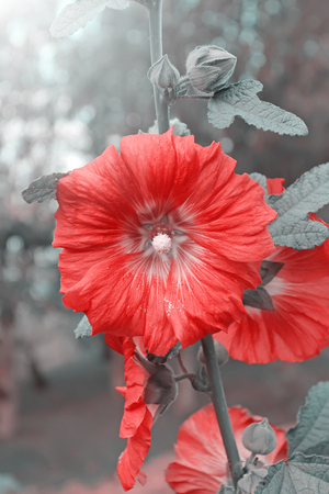 flower color vintage style. Stock Photo