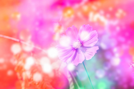 Defocus beautiful pink flowers abstract design with color filters Stock Photo