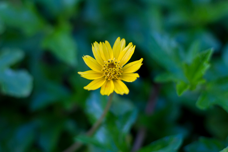 yellow flower and de-focus background
