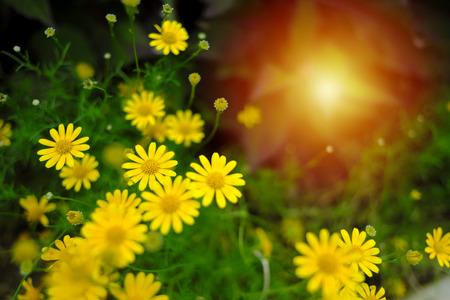 De bloemen zijn klein, de kleuren blijven en de beelden vervagen de zachtheid van het beeld en het warme licht van Efeze. Stockfoto