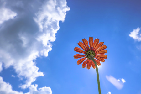View under orange flowers and blue sky with clouds