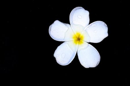 White flowers float on the water surface and feel refreshed.