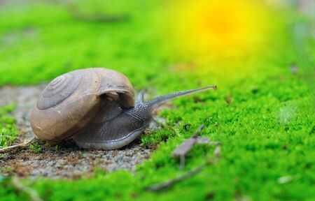 Closeup of snails, small snails and bright green moss.