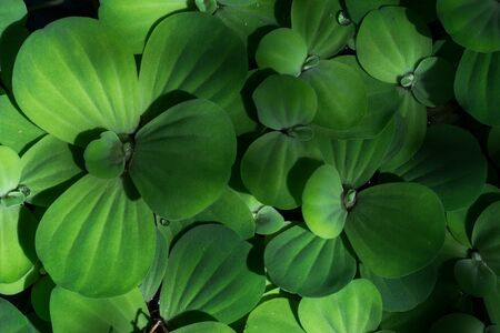: Green leaves lined up in the background