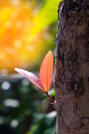 The young leaves sprout from the tree, ready to grow.