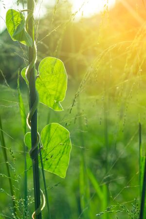 The green leaves and soft light in the morning give a fresh feeling.