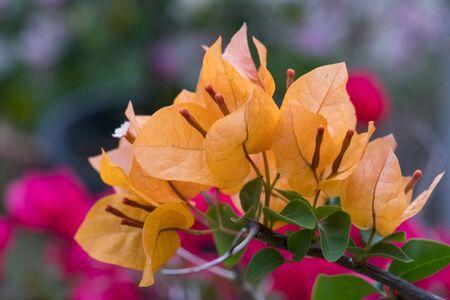Beautiful fresh orange flower Natural blurred background
