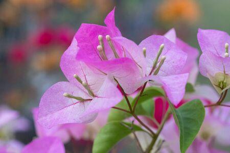 Pink flowers, bright, beautiful, background, blur, nature