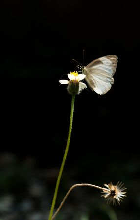 The butterfly close up perched on the roadside flowers Foto de archivo