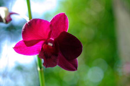 Purple flowers natural background blur. Foto de archivo