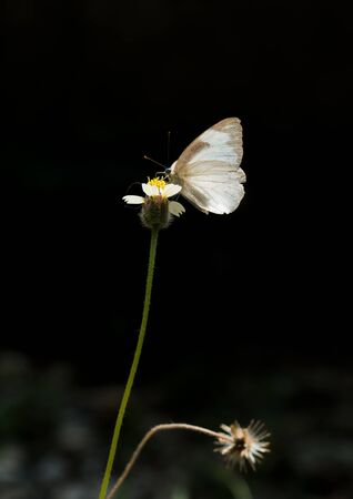 : The butterfly close up perched on the roadside flowers Foto de archivo