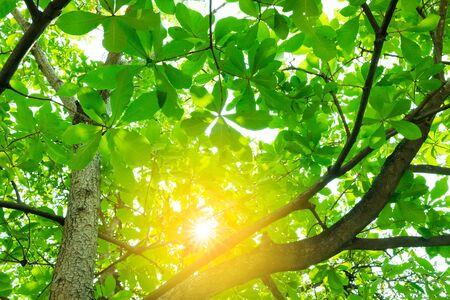View under the green trees and the sun shines.