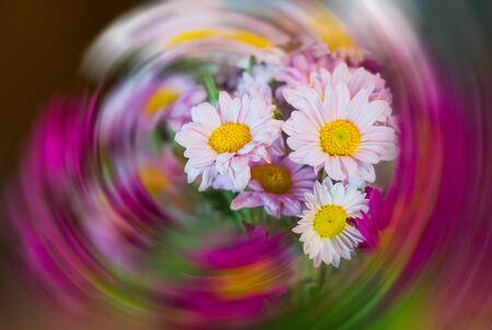 Rose apple flowers as a background, blur, motion, strange circles
