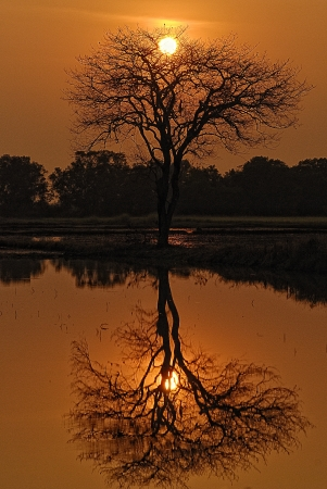Mirror Tree Stock Photo - 14579922