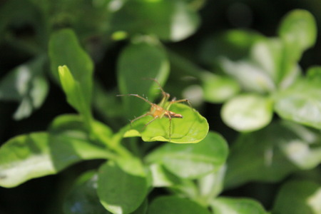 sunshine insect: spider