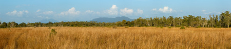phangnga: Biome Savanna sunset time with Panoramic scene at Tropical Deciduous Forest. Koh Pratong Marine Nationalpark. Phangnga Province. Thailand Stock Photo