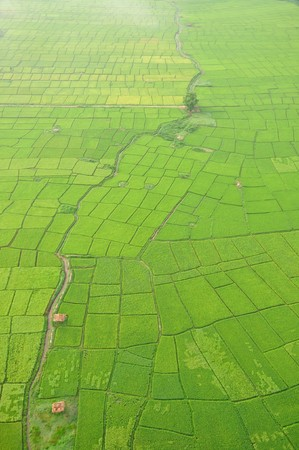 rice field: Rice field in Chiangmai, northern Thailand Stock Photo