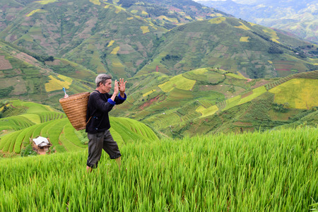 old farmer: old farmer works and carries baskets on his shoulder in the field of rice on rice terraces