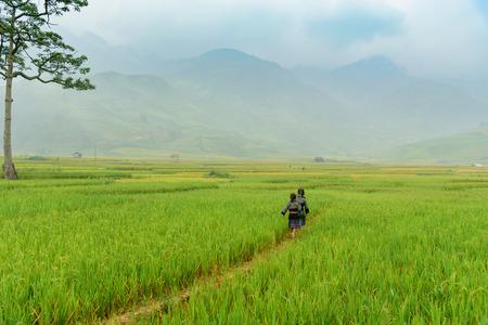 little farmer are walking on rice field