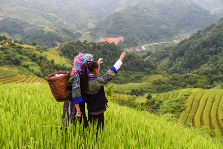 woman farmer carry basket on shoulder work on rice terrace with her daughter Stok Fotoğraf