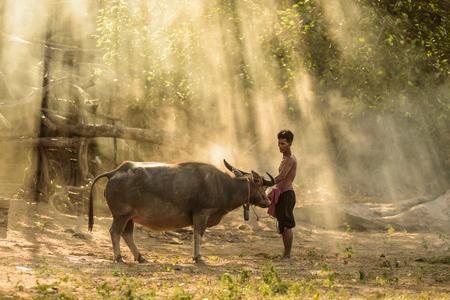 backgruond: farmer and buffalo with amazing light backgruond