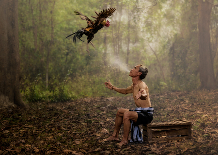 animal  bird: Asian farmer training his fighting cock by water