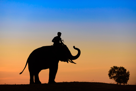 Elephant silhouette at sunset on blue and yellow sky