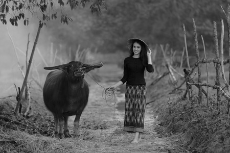 identidad cultural: Asian woman wearing rural Thai dress with her buffalo
