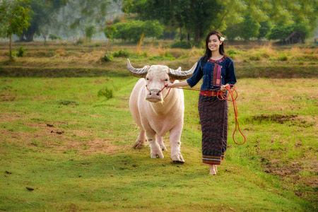 happy families: Beautiful Asian girl (Thai) in traditional dress and albino buffalo in field