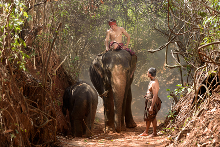 big elephant and baby walking in the jungle with mahout