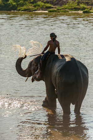 big elephant stands on river and blows water to its back by its trunk (long nose)