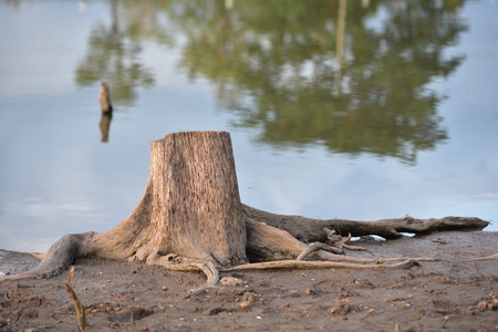 old tree stump with river background