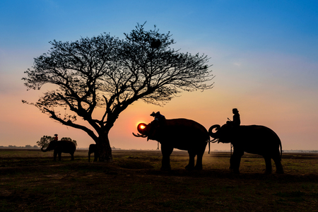 silhouette elephants standing under the tree at sun rise