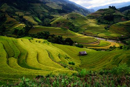 Rice fields on terraced of Mu Cang Chai, YenBai, Vietnam. Beautiful rice fields prepare to harvest.