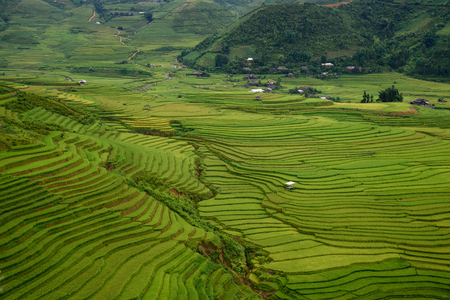 Rice fields on terraced of Mu Cang Chai, YenBai, Vietnam. Rice fields prepare the harvest at Vietnam. Vietnam landscapes. Stok Fotoğraf - 61822879