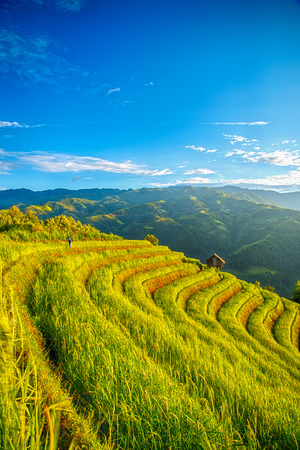 Rice fields on terraced of Mu Cang Chai, YenBai, Vietnam. Rice fields prepare the harvest at Vietnam. Vietnam landscapes.