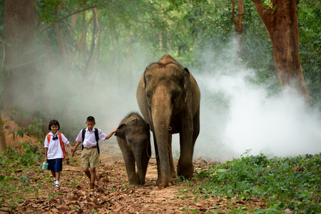 brother and sister go back home after learning by walking with their elephant Stok Fotoğraf