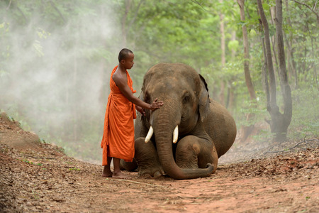 monk and big elephant sitting beside in the forest Stock Photo