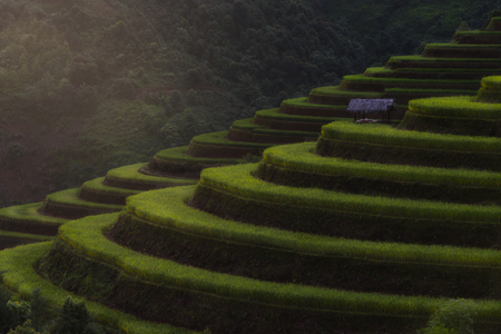 Rice fields on terraced of Mu Cang Chai, YenBai, Vietnam. Rice fields prepare the harvest at Vietnam. Vietnam landscapes. Stok Fotoğraf - 63276867