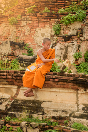 Young Buddhist novice monk reading and playing with a cat Stok Fotoğraf
