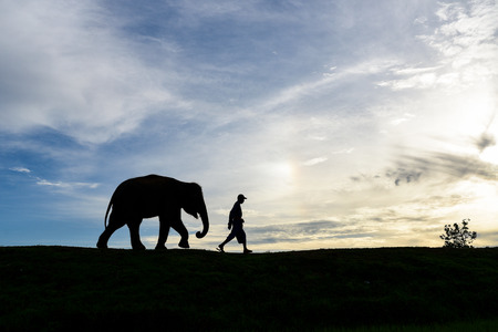 silhouette baby elephant walking follow a man with beautiful sky