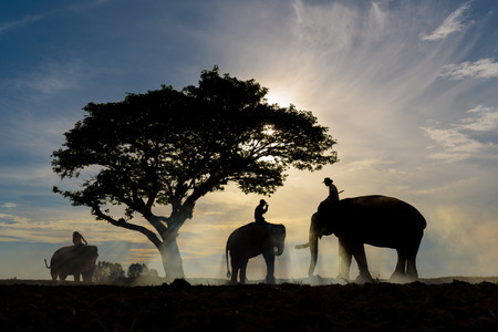 silhouette of three men ride each their elephant under big tree with beautiful blue and orange sky during sunrise Stok Fotoğraf