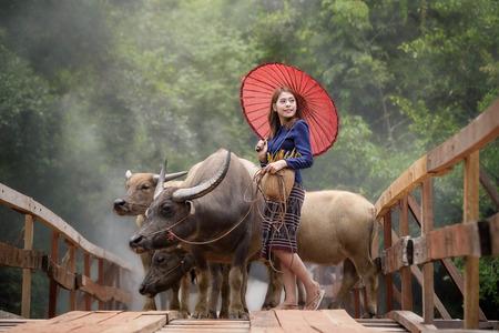 beautiful Asian woman wearing rural Thai dress with her buffalo