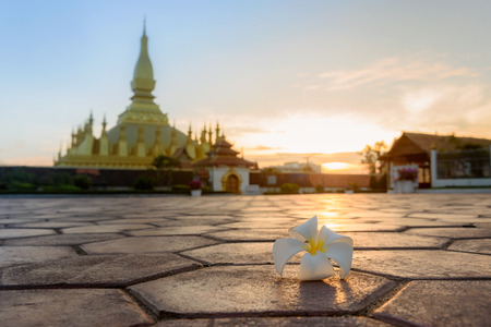 Plumeria (Champa flower); the symbol flower of Laos; in sunrise with Pha That Luang Stupa Vientiane background Stok Fotoğraf - 72751850