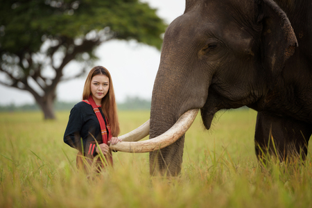 beautiful girl with smiling elephant, elephant village, Surin, Thailand, Thai woman in traditional dress with elephant Stok Fotoğraf - 72751862