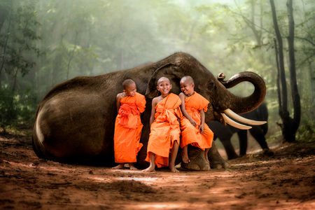 smiling novice monk Thailand and big elephant with forest background, novice monk Thailand sit on elephants knee smiling and laughing happily