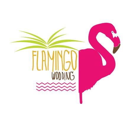 flamenco ave: Flamingo aves