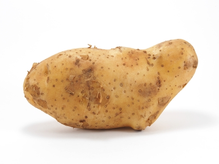 spud: Potato on white background