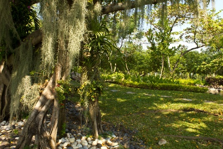 banyan tree and orquid photo