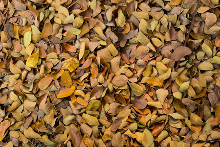 dry leaf: Dry leaf on the ground Stock Photo